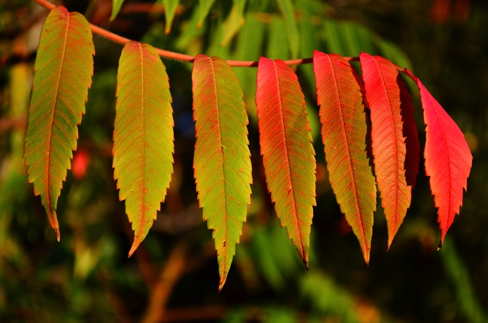 Red-Green Leaves from Garry Knight